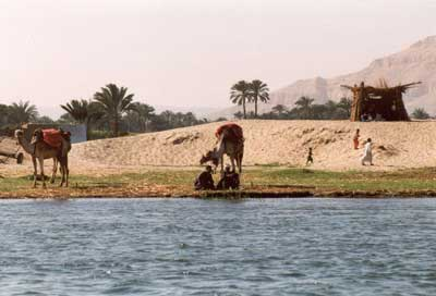 people & camels