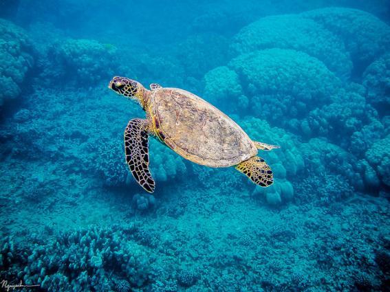 Global Ocean Observing System San Nguyen