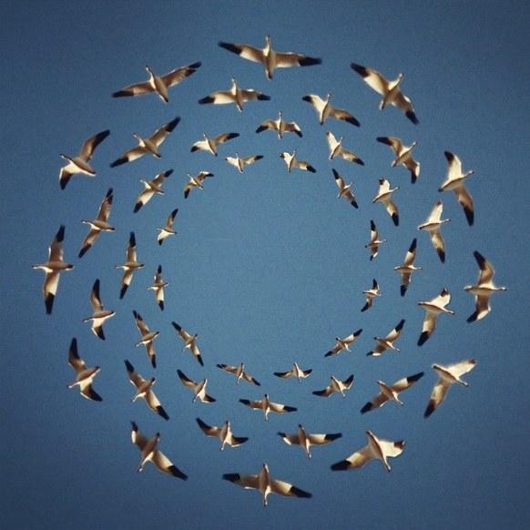 https://www.wired.com/2014/09/shaun-kardinal-flying-formation/# Shaun Kardinal