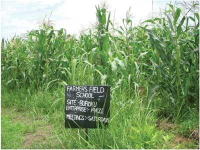 Farmers field school