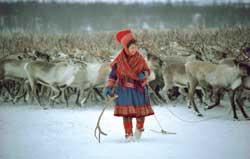 reindeer & herder