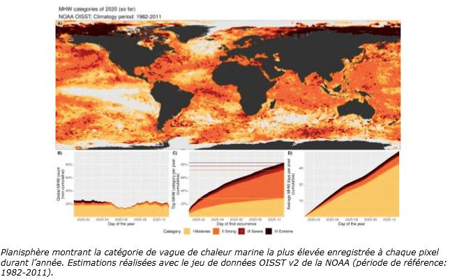 Planisphère montrant la catégorie de vague de chaleur marine 12-20