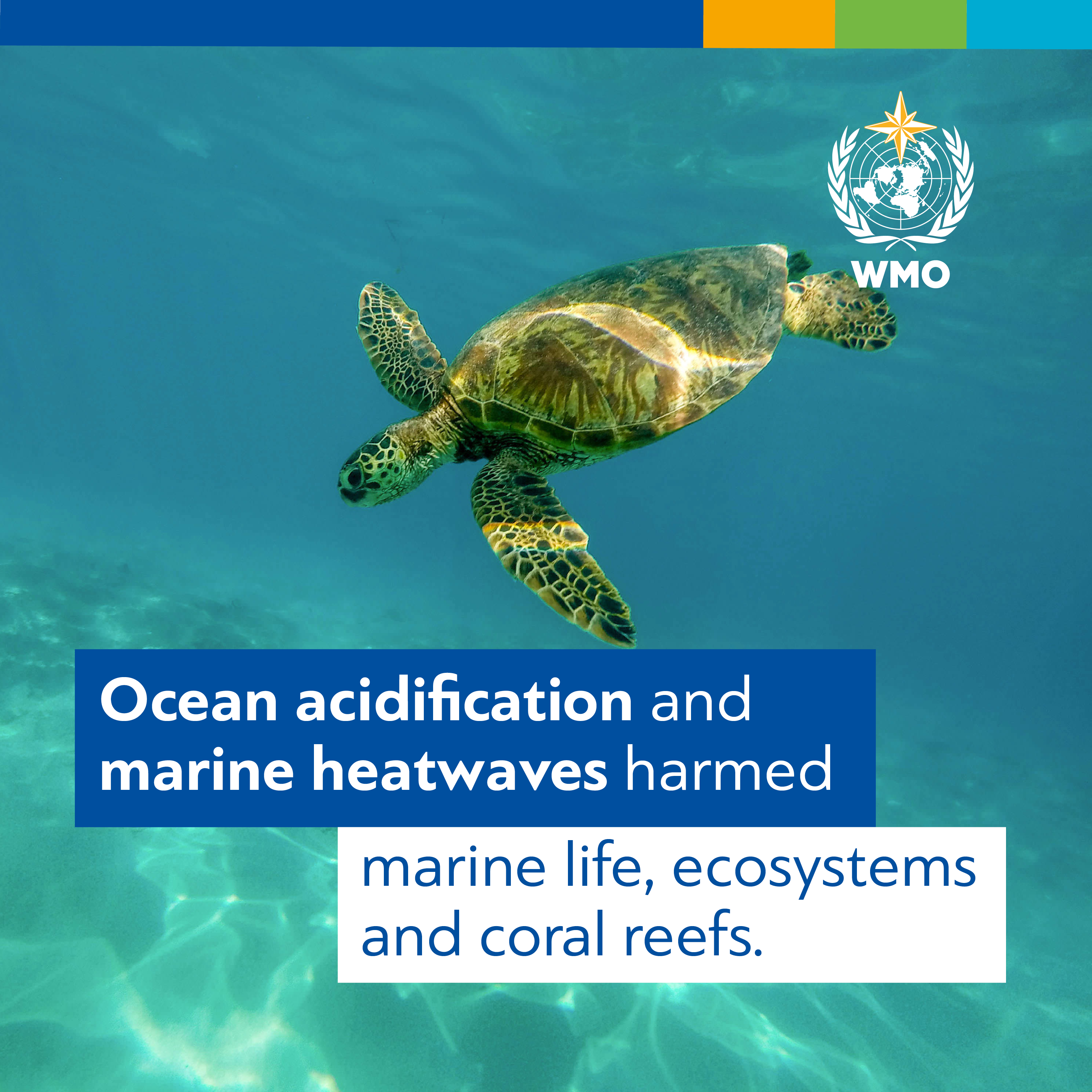 State_of_the_Climate_Digital_Card_Ocean_acidification_and_marine_heatwaves