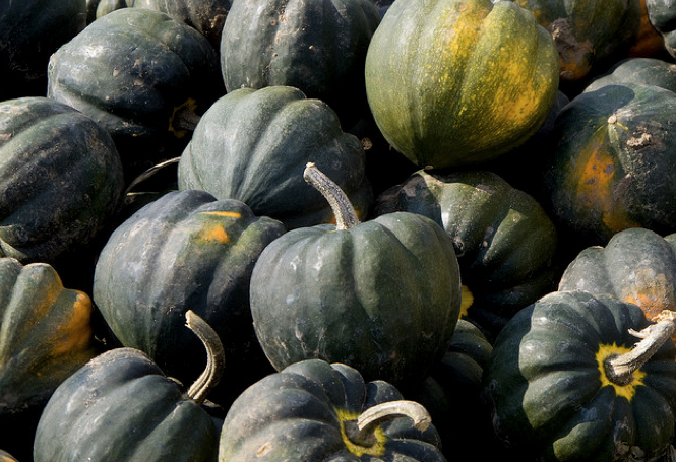 The 2014 drought destroyed 80% of squash harvests in Tonga (Photo: Gary J. Wood/Flickr)
