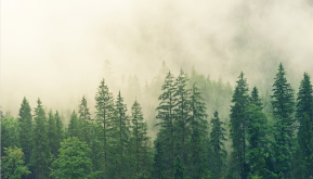 Are forests a solution to climate change?
