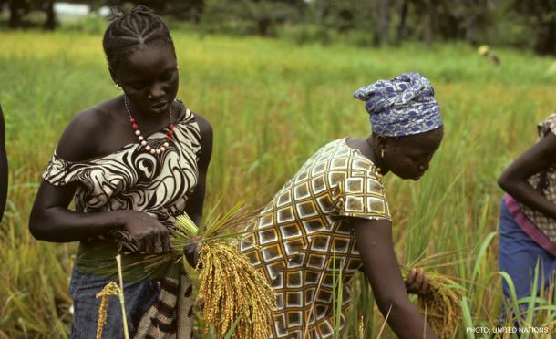 Farming in Senegal