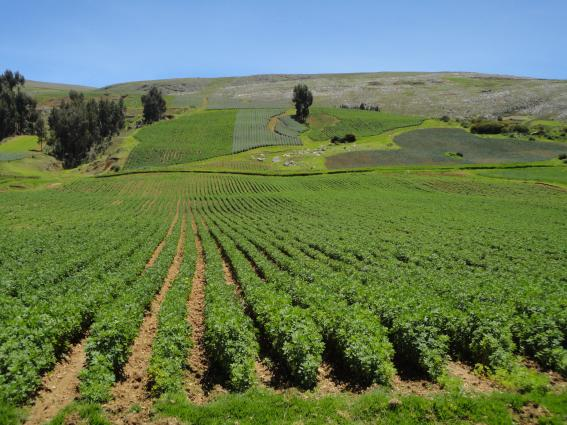 Weather and climate information for food security