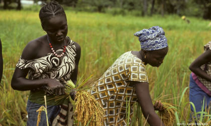 Farming in Senegal