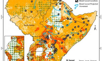Desert locust crisis in East Africa, 2020