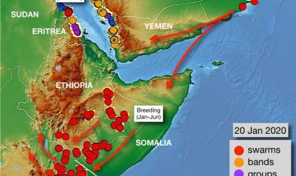 Heavy rains contribute to desert locust crisis in East Africa, Jan 2020
