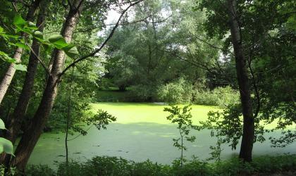 lake eutrophication