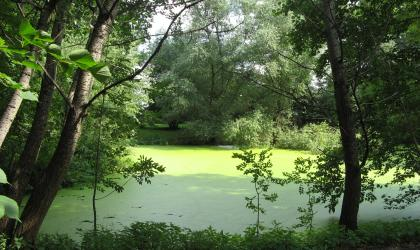 lake eutrophication